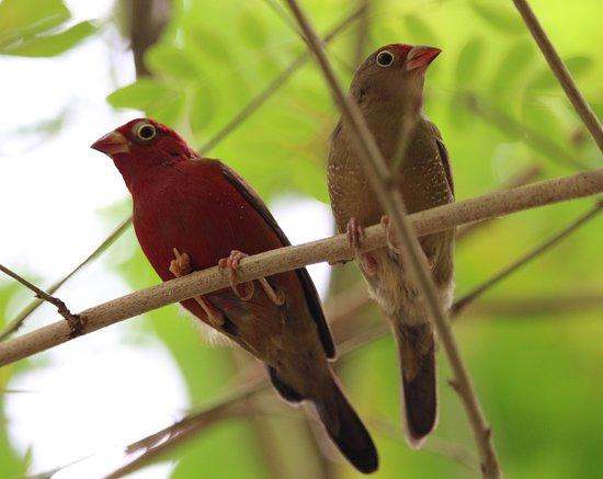 เทมส์, นิวซีแลนด์: A pair of tiny colourful birds.