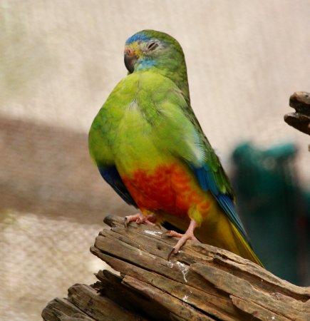 Thames, Nueva Zelanda: A lonely parakeet.