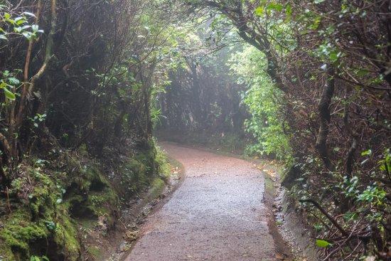 Poas Volcano National Park, Kostaryka: Rainforest Nature Trail