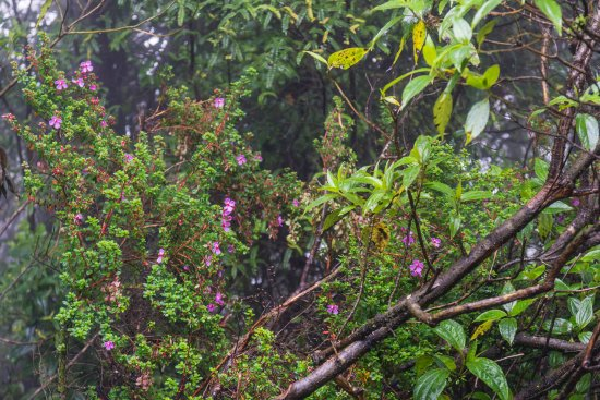 Poas Volcano National Park, Kostaryka: Wildflowers Along the Trail