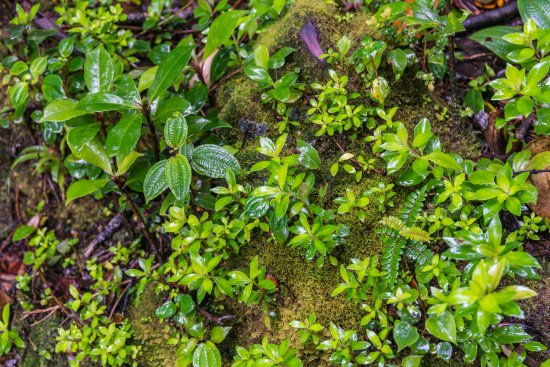 Poas Volcano National Park, Kostaryka: lush Ground Cover