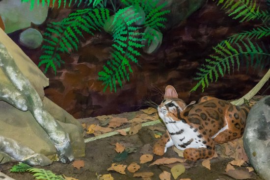 Poas Volcano National Park, Kosta Rika: Natural History Museum Display