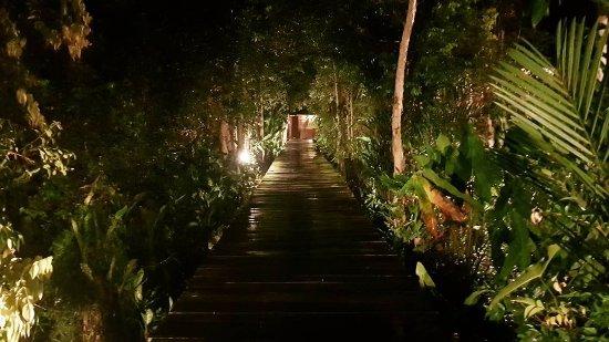 Rimba Orangutan Eco Lodge: IMG_20171102_152327_692_large.jpg
