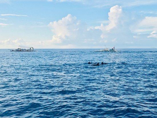 Balicasag Island, Philippines: photo0.jpg