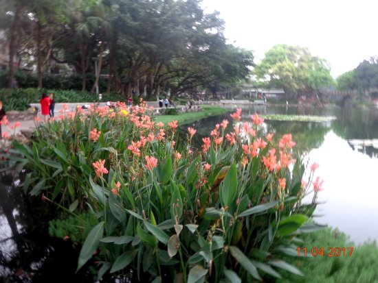 Liwan Lake Park: Цветущие канны у набережной озера