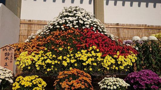 Kasama, Japonya: 菊花展示ゾーン
