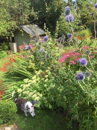 Milton Abbas, UK: The garden in full summer.
