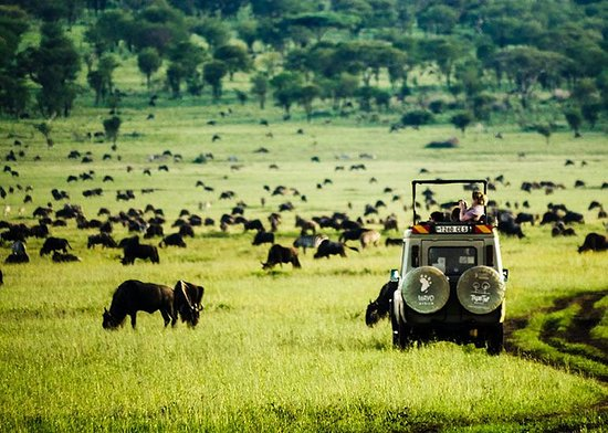 Wayo Africa: Great Wildebeest Migration in the Serengeti