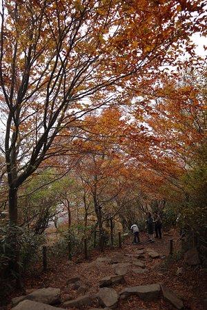 Autumn leaves on Mount Tsukuba