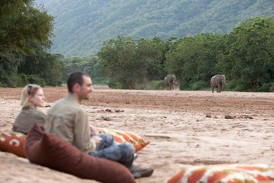 Wayo Africa: Elehants at Lake Manyara Green Camp