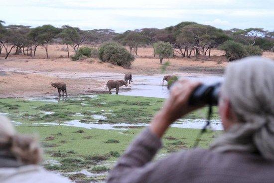 Wayo Africa: Tarangire walking safari