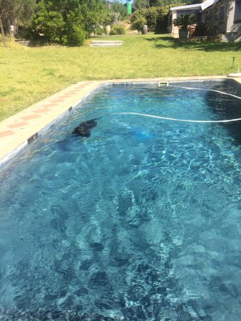 Malmesbury, Sudafrica: Enjoying the sparkling pool