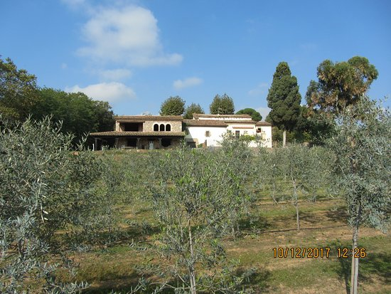 Bigues i Riells, Spain: Very old estate with refurbished olive groves.