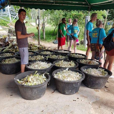 Tha Yang, Thailand: Las comidas listas para los diferentes elefantes
