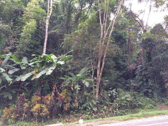 Khun Korn Waterfall: Entrée du parc