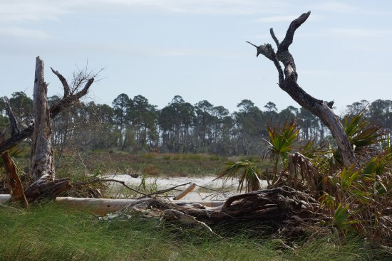 Driftwood Beach: Right at the beginning from the parking lot