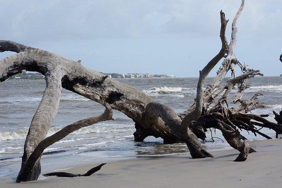 Driftwood Beach: driftwood