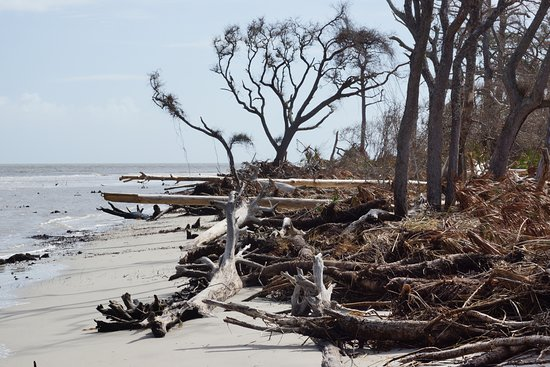 Driftwood Beach: and some more