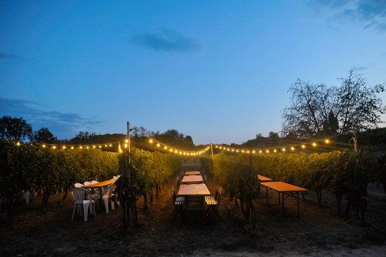 San Miniato, Italy: Scende la sera sulla cantina!