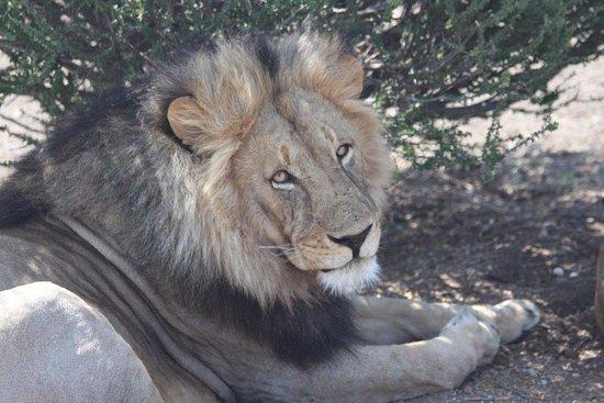 Mashatu Game Reserve, Botswana: Game Drive