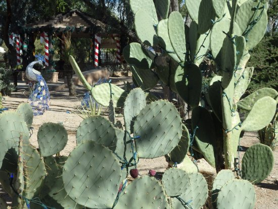 Ethel M Chocolates Factory and Cactus Garden: One of the many varieties of cactus