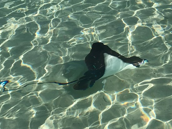 Constance Lemuria: Daily visiting Rays at the Beach