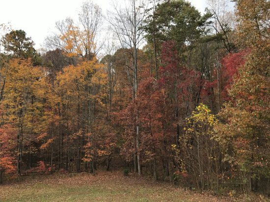 Smith Mountain Lake: Fall Color