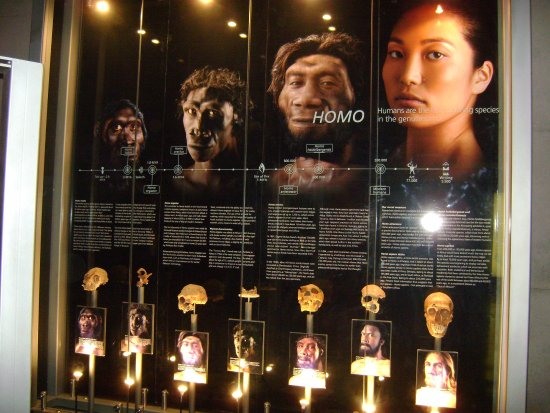 Cradle of Humankind World Heritage Site, South Africa: Evolución del ser humano