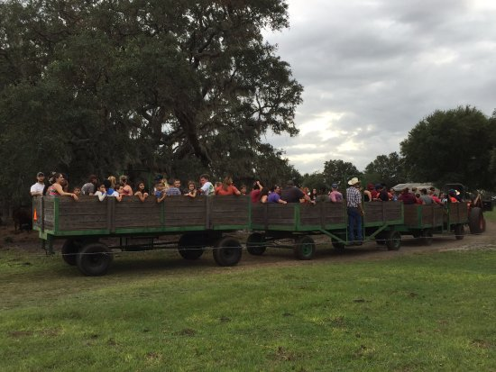 Polk City, FL: The hay ride.