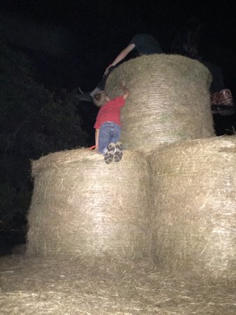 Polk City, FL: The hay fort.