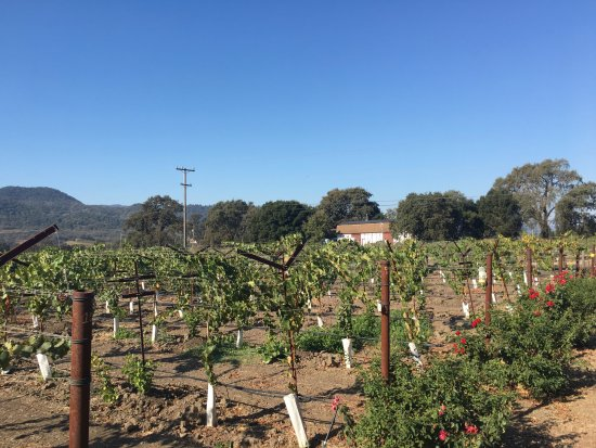 Yountville, CA: Bell Winery