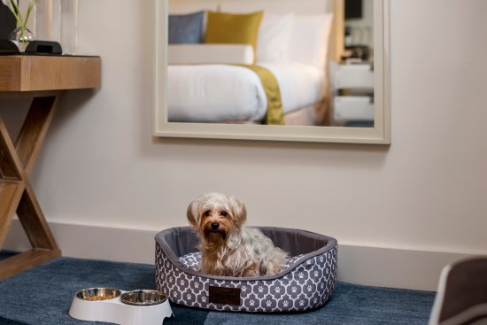 Iberostar 70 park avenue hotel updated 2018 prices for New york pet friendly hotels
