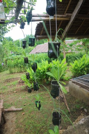 Maribojoc, Philippines: Plants being grown in recycled bottles