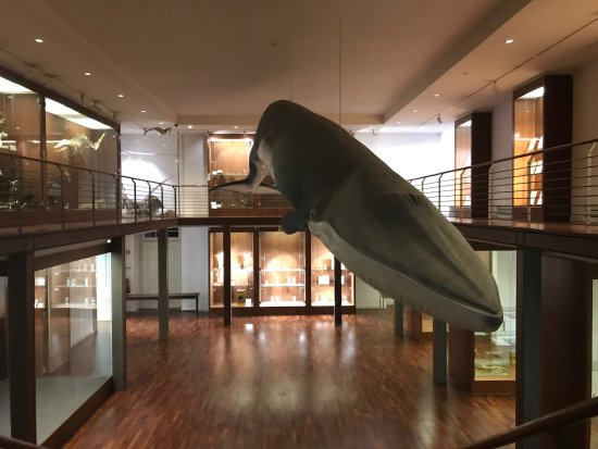 National Museum of Natural History and Science