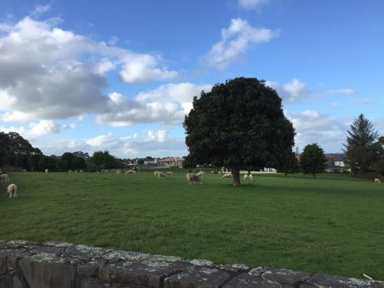 Parque Cornwall: sheeps in the park