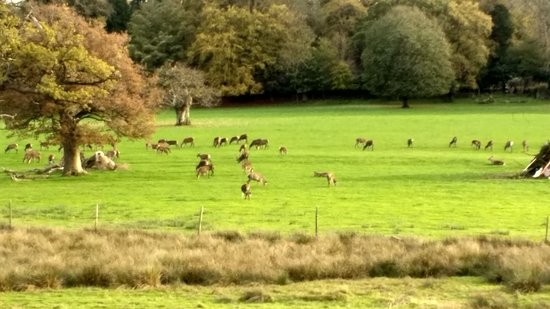 Burley, UK: View from front of building (deer not guaranteed)