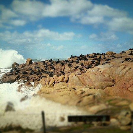 Hosteria La Perla: Loberia — Cabo Polonio