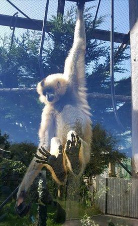 Monkey World: 20170913_185230_large.jpg