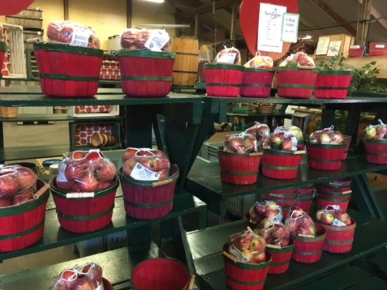 White Bear Lake, MN: Apple time at Pine Tree Orcharrds