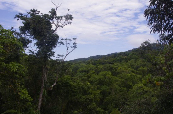 Cow Bay, Australia: More tropical forest