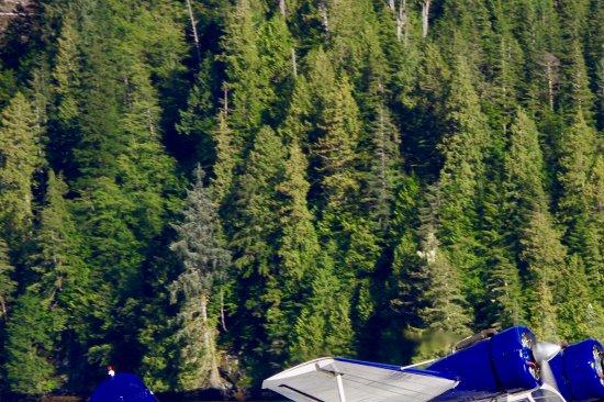 Port Hardy, كندا: Grumman Goose floatplane from Port Hardy