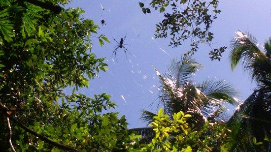 Cahuita, Costa Rica: DSC_0020_large.jpg