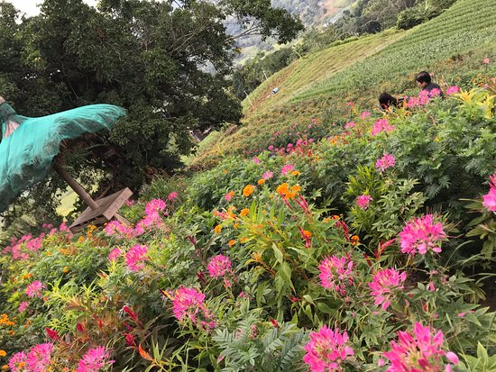Sirao Flower Garden (Cebu City, Philippines): Top Tips