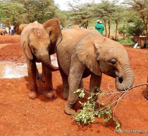 David Sheldrick Wildlife Trust: photo4.jpg