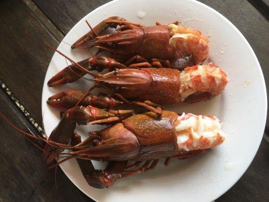 Malanda, Australia: Cooked Red Claw