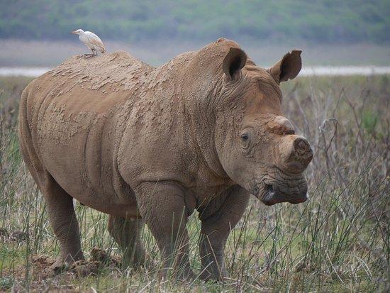 Pongola, جنوب أفريقيا: 9960235_large.jpg