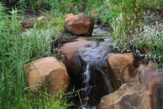 Cederberg, Republika Południowej Afryki: Spring