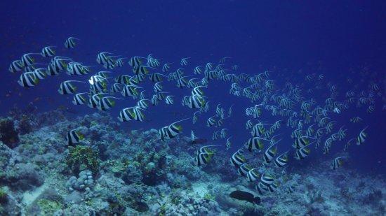 Werner Lau Diving Center Sharm el Sheikh: Diving the SW corner of Jackson Reef with Werner Lau DC in Sharm el Sheikh.