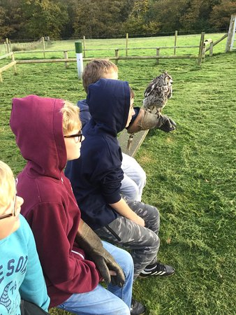 Falconry Experience Wales Photo