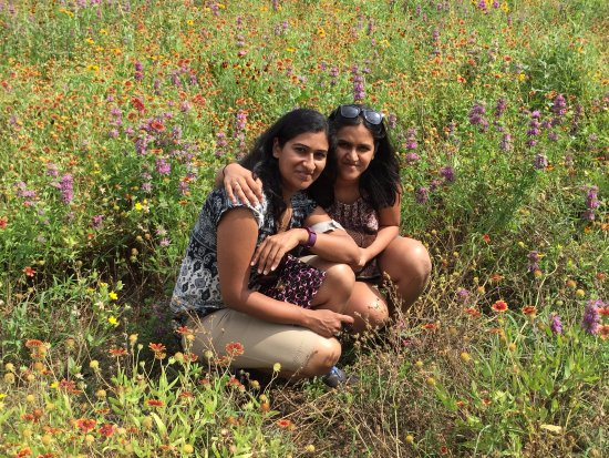 Wildseed Farms: Amidst the wildflower
